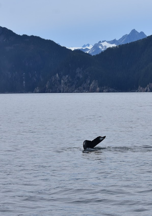 Even spotted a whale on the way back