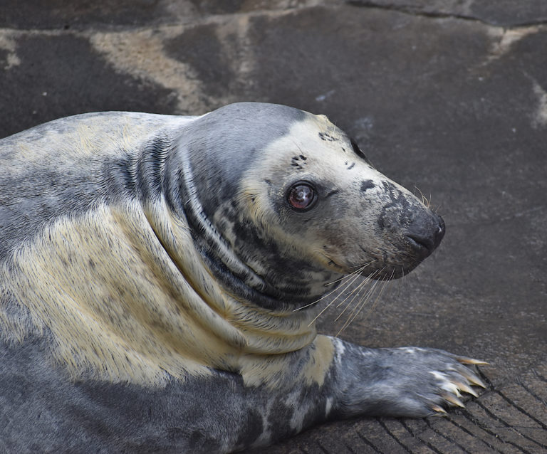 Harbor seal loving the weather!